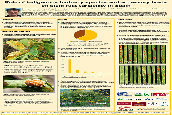 Role of indigenous barberry species and accessory hosts on stem rust variability in Spain