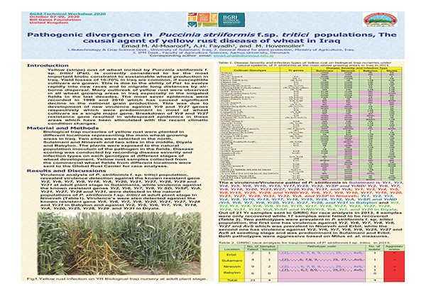 Pathogenic Divergence in Puccinia Striiformis f.sp. tritici Population, the Causal Agent of Wheat Rust in Iraq