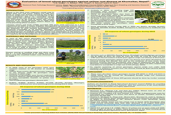 Evaluation of Bread Wheat Genotypes against Yellow Rust Disease at Khumaltar, Nepal