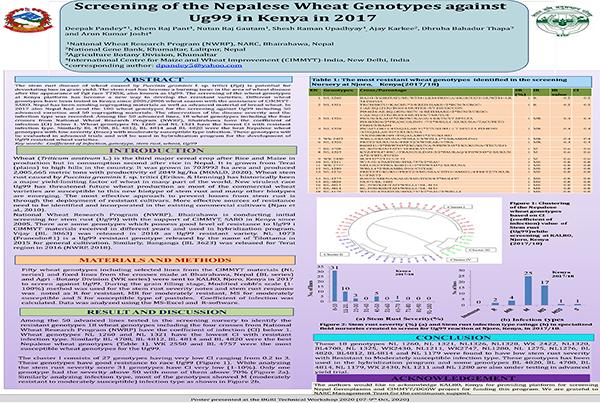 Screening of the Nepalese Wheat Genotypes against Ug99 in Kenya in 2017/2018