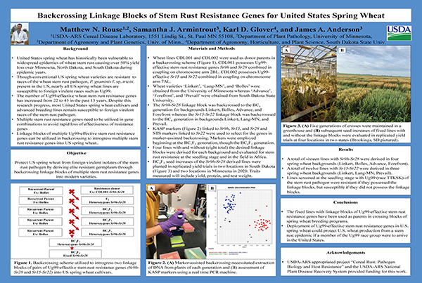 Backcrossing Linkage Blocks of Stem Rust Resistance Genes for United States Spring Wheat